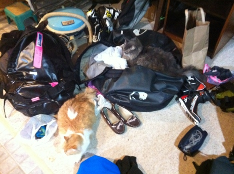 The house we were in had two friendly cats who found my bags extremely comfortable!